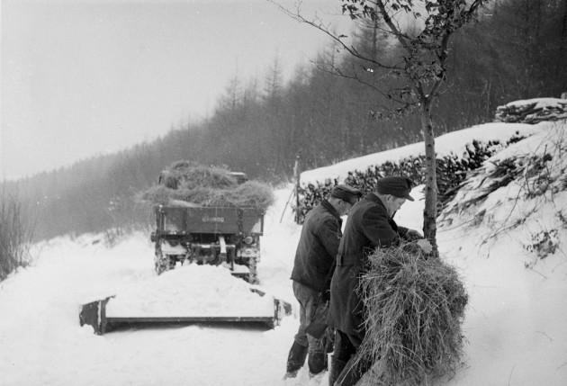Unimog U25, Baureihe 401 beim Transport von Wildfutter