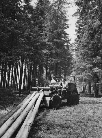 Unimog Baureihe 411 mit Krailing Ausrüstung beim Rücken von Langholz