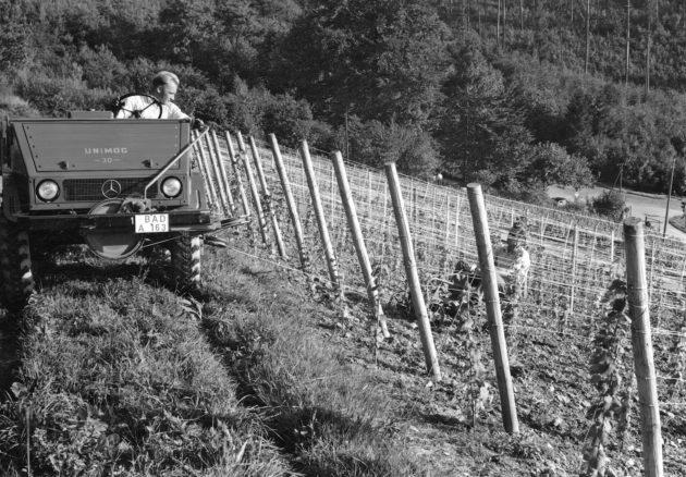 Unimog U30, Baureihe 411 bei Pflugarbeiten im Weinberg mit Hilfe der Binger Seilwinde